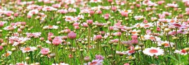 Květinová louka