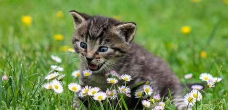 Kotě chytá kytky na zelené louce
